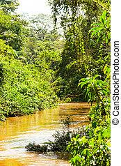 Amazon River Affluent In Ecuador - Dense Vegetation In...
