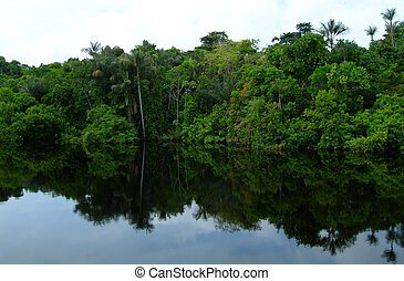 Amazon River basin Brazil - Rain forest mirrored in waters,...
