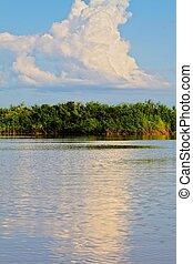 Amazon Riverbank. HDR image