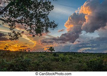 Amazon savannah in the peruvian Amazon jungle at Madre de Dios Peru