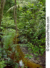 Amazon tree and vegetation whit water stream