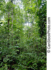 Amazon trees and vegetation natural pattern...