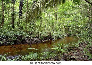 amazon, vegetación, y, agua, corriente