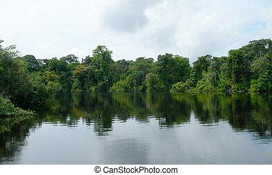 amazonestroom rivier bekken, brazilie