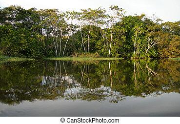 amazonestroom rivier, rainforest
