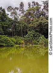 Amazonian Jungle, Cuyabeno Wildlife Reserve, South America