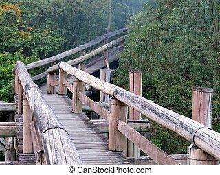 amazonka, stopovat, ecotourism, les