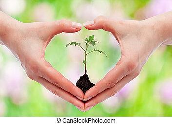 ambiental, conceito, consciência, proteção