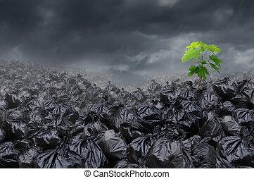 ambiental, esperança