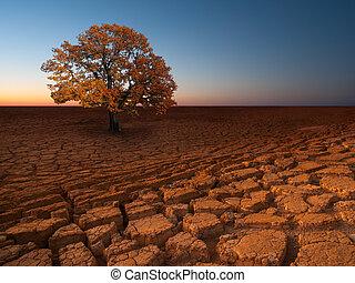 ambiental, Extracto, fondos