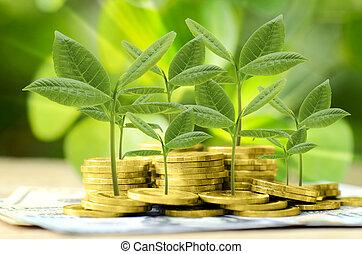 ambiental, moneda, verde, oro, fondo.