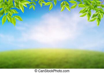 ambiente, concepto, día soleado, en, el, meadow., resumen, natural, fondo.