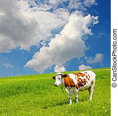 ambiente, ecológico, vaca