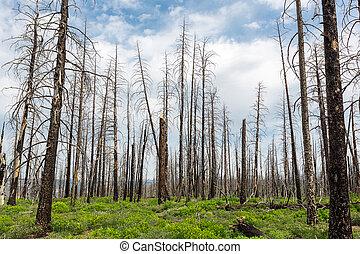 ambiente, paisaje., deadwood, ecología