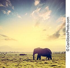 amboseli, 象, アフリカ, サファリ, アフリカ, 日没,  kenya, サバンナ