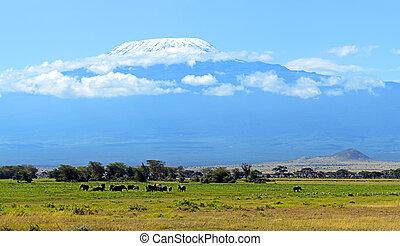 Amboseli elephants - Elephants family on African savanna. ...