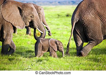 amboseli, familj, elefanter, afrika, savanna., safari, kenya