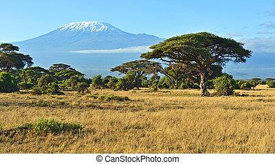 Amboseli National Park and Mount Kilimanjaro in Kenya