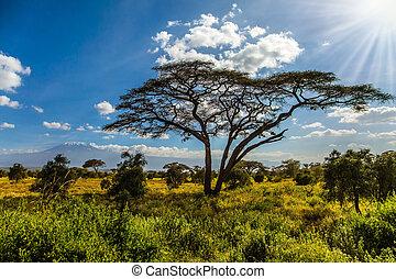 Amboseli Park in Kenya