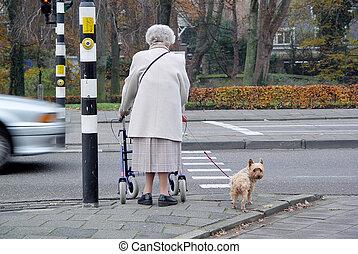 ambulante, 2, perro