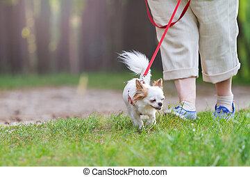 ambulante, cuarentena, parque perro, durante