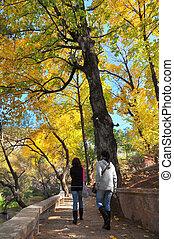 ambulante, por, otoño, parque