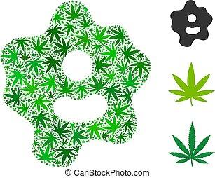 ameba, skład, od, marihuana