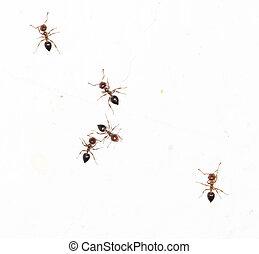 Mimi stockfoto bilder 422 mimi lizenzfreie bilder und fotos zum herunterladen verf gbar von - Ameisen in der wand ...