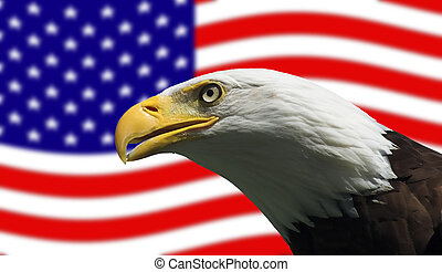 American Bald Eagle and Flag - Bald Eagle in guarding...