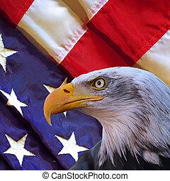 American bald eagle and USA flag