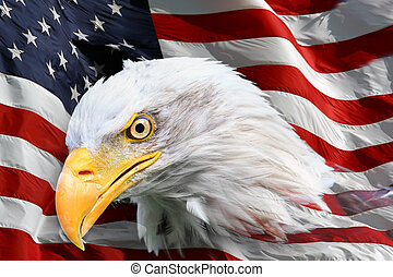 American bald eagle flag