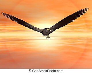 American bald eagle flying in sunset sky. High resolution...