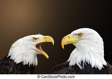 American bald eagle - two bald eagle against a nature ...