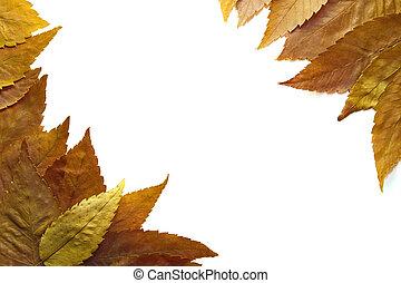 American Beech Tree Leaves - American Beech Tree Autumn...