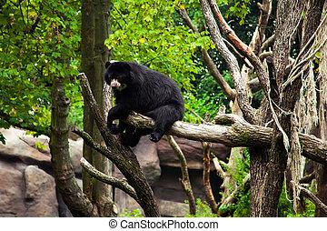 American black bear on a tree.