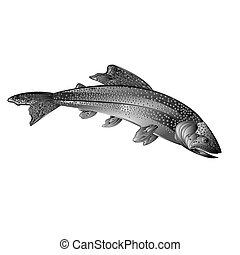 American brook trout as wrought metal vintage vector.eps