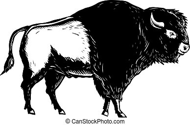 american-buffalo-bison-side-WC-BW