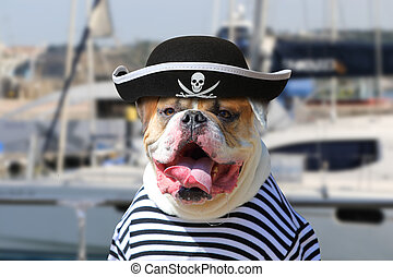 American Bulldog dressed in a pirate clothing - Portrait of...