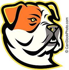 american-bulldog-HEAD-MASCOT