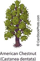 American chestnut icon, flat style - American chestnut icon...
