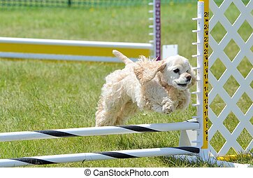 American Cocker Spaniel at a Dog Agility Trial - American...