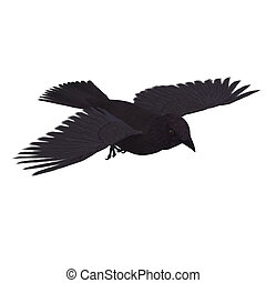 American Crow. 3D rendering with clipping path and shadow...