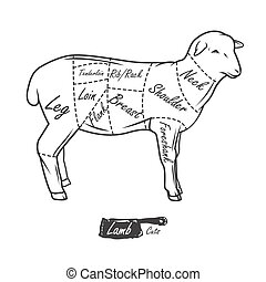 American cuts of lamb. Vintage typographic hand-drawn ...