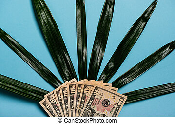 American Dollars Cash Money and palm leaf