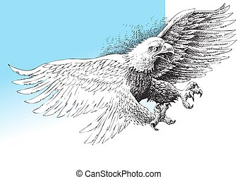 american eagle isolated on the white background