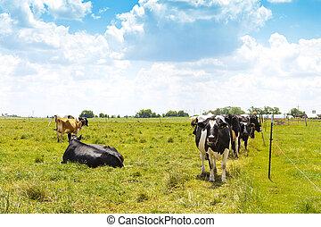American Farmland With Blue Sky