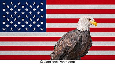 American flag, Bald Eagle, national symbols of USA