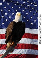 American Flag Eagle perched
