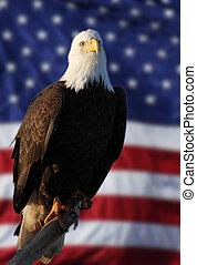 American Flag Eagle perched blur flag