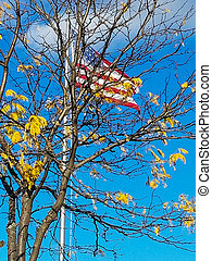 American flag in autumn tree